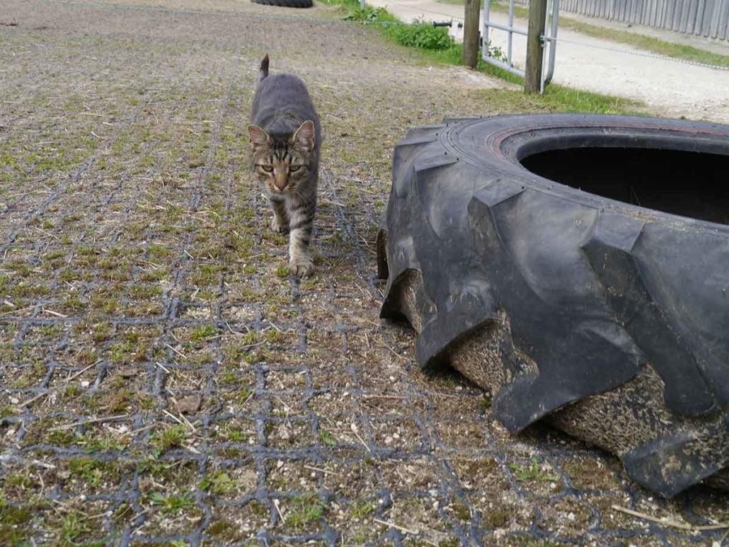 Ecoraster Katze